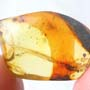Rare Winged Seed In Dominican Amber