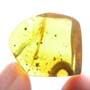 Rare Breached Millipede In Dominican Amber