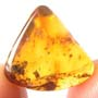 Rare Full Of Mites In Dominican Amber