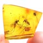 Rare Two Mosquitos In Dominican Amber.