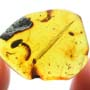 Rare Breached Millipede In Dominican Amber
