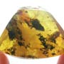 Rare Isopod In Dominican Amber