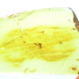 Rare Mating Black Scavenger Fly And Spider In Dominican Amber