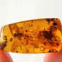 Rare Large Bloated Worker Termite In Dominican Amber.
